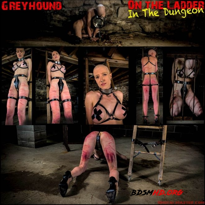 Greyhound – On The Ladder In The Dungeon - Brutal Master - 2019 - FullHD