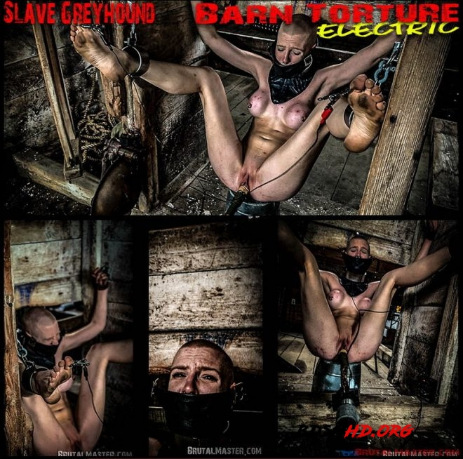 Slave Greyhound Barn Torture Electric - BrutalMaster - 2020 - FullHD