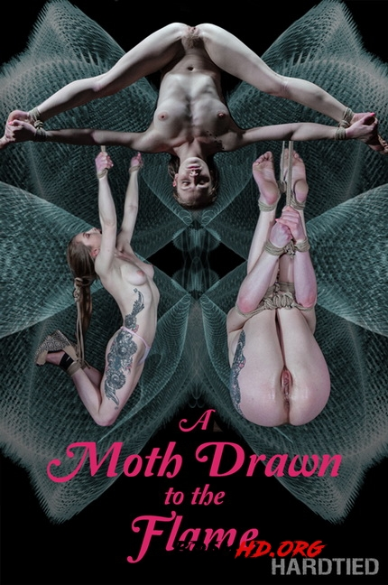 A Moth Drawn To The Flame - Hardtied - 2020 - HD